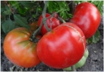 . Marmande Garnier Rouge Big